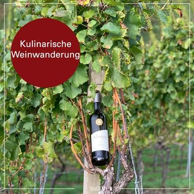 Kulinarische Weinwanderung am 24. April 2021